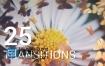 AE模板25种蝴蝶飞散转场效果浪漫婚礼画面转换效果