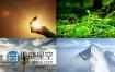 企业文化精神梦想宣传植物生长视频素材