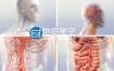 视频素材医疗人体三维效果视频