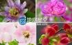 视频素材:实拍春天的花朵盛开过程实拍