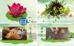 AE模板三维中国风端午节文化宣传动画