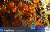 C4D插件:流体模拟插件NextLimit RealFlow C4D 2.6.4.0092