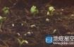 实拍素材:植物生长发芽视频素材