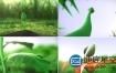 AE模板种子发芽长绿叶到开花片头logo演绎动画