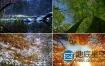 视频素材:季节交替四季变换素材