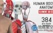 AE模板-E3D三维模型医学人体解剖学健康医疗展示演示动画Human Body Anatomy