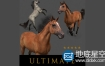 3D模型:马匹模型 CGTrader – Ultimate Horse Collection – 3d model