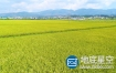 视频素材:航拍实拍超清黄金色水稻