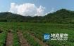 视频素材-航拍高清高山猴魁绿茶实拍素材