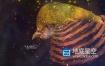 AE模板-光芒穿梭星空星系Form粒子飞散汇聚图像文字排版片头 Space Slideshow