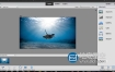 Adobe Photoshop Elements 2020 照片编辑软件