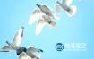 视频素材-实拍一群白鸽飞向蓝天慢动作延时拍摄
