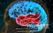 AE模板-大脑结构介绍HUD解剖学生物学医学演示教育科学机构人脑神经元