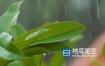 视频素材-下雨天雨打树叶实拍素材