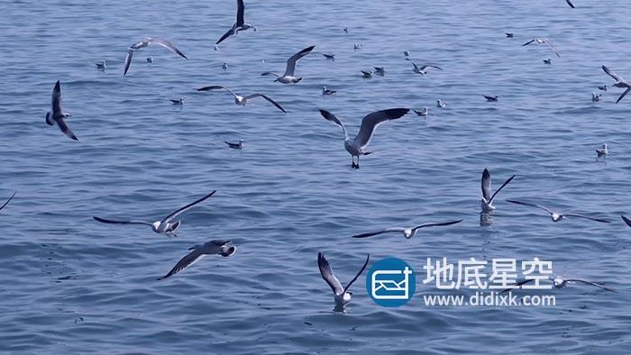 视频素材-自然风景海洋大海鸟翱翔海鸥海鸟飞翔